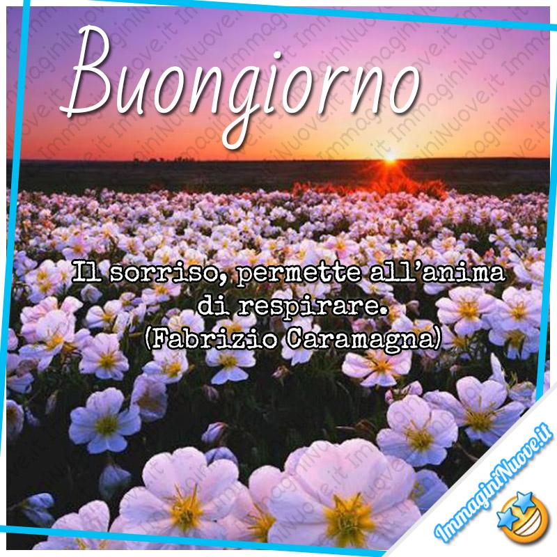 Buongiorno Immagini E Frasi Con I Fiori Immagininuove It