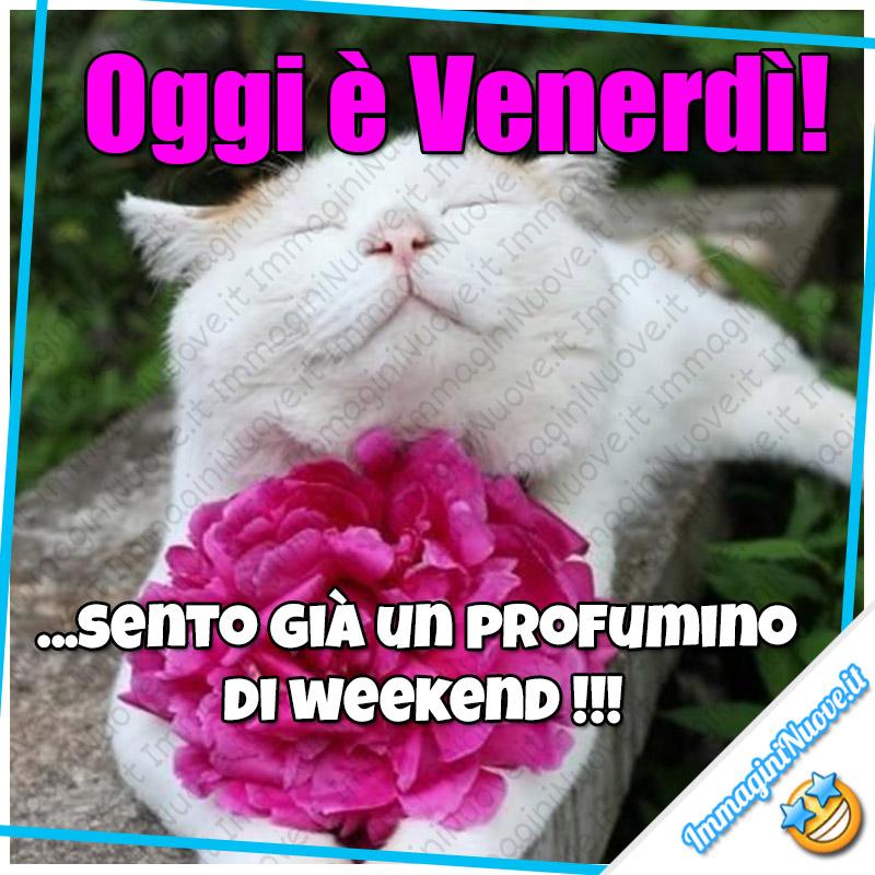 Oggi è Venerdì! ...sento già un profumino di Weekend !!!
