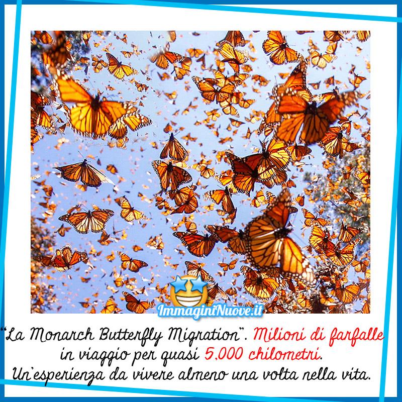 """La """"Monarch Butterfly Migration"""". Milioni di farfalle in viaggio per quasi 5.000 chilometri.. Un'esperienza da vivere almeno una volta nella vita."""
